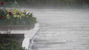 Βροχή που εμπίπτει σκληρά στο πάρκο απόθεμα βίντεο