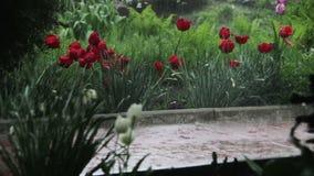 Βροχή που εμπίπτει σκληρά στο πάρκο φιλμ μικρού μήκους