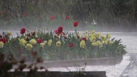 Βροχή που εμπίπτει σκληρά στο πράσινο πάρκο απόθεμα βίντεο