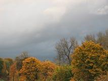 Βροχή πτώσης Στοκ εικόνες με δικαίωμα ελεύθερης χρήσης