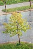 βροχή πόλεων Στοκ φωτογραφία με δικαίωμα ελεύθερης χρήσης