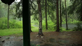 Βροχή στα ξύλα απόθεμα βίντεο