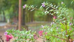 βροχή στα πράσινα φύλλα φιλμ μικρού μήκους
