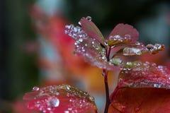 Βροχή στα φύλλα ΙΙΙ Στοκ Φωτογραφία