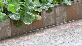 Βροχή στην επιφάνεια νερού φιλμ μικρού μήκους
