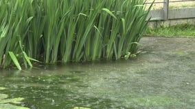 Βροχή στη λίμνη στο πάρκο απόθεμα βίντεο