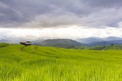 Βροχή στον πράσινο τομέα πεζουλιών ρυζιού και το νεφελώδη ουρανό Στοκ φωτογραφία με δικαίωμα ελεύθερης χρήσης
