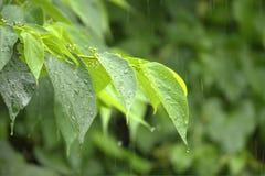 Βροχή στο δάσος Στοκ Φωτογραφίες