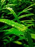 Βροχή στο πράσινο Στοκ φωτογραφίες με δικαίωμα ελεύθερης χρήσης