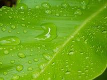 Βροχή στο φύλλο Στοκ Εικόνες