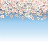 Βροχή των ρόδινων και άσπρων ανθών κερασιών Στοκ Φωτογραφίες