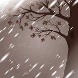 Βροχή φθινοπώρου με τη σκιαγραφία δέντρων Στοκ εικόνα με δικαίωμα ελεύθερης χρήσης