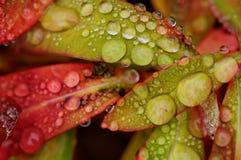 Βροχή φθινοπώρου Στοκ Φωτογραφία