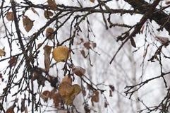 Βροχή φθινοπώρου Στοκ εικόνα με δικαίωμα ελεύθερης χρήσης