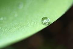 βροχή φύλλων ακρών απελε&upsilo στοκ φωτογραφίες με δικαίωμα ελεύθερης χρήσης