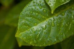 βροχή φύλλων Στοκ Εικόνα