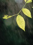 βροχή φύλλων στοκ φωτογραφία