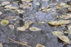 Βροχή, φύλλα και λακκούβες Στοκ Φωτογραφίες