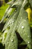 βροχή φύλλων δροσιάς Στοκ εικόνες με δικαίωμα ελεύθερης χρήσης