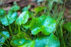 βροχή φύλλων δροσιάς στοκ φωτογραφία