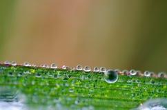 βροχή φύλλων δροσιάς στοκ εικόνες