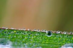 βροχή φύλλων δροσιάς στοκ φωτογραφίες