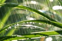 βροχή Στοκ Φωτογραφίες