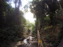 Βροχή Forrest Στοκ Φωτογραφίες