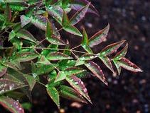 Βροχερά φύλλα ημέρας στοκ φωτογραφίες