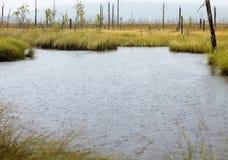 Βροχερή λίμνη Στοκ εικόνες με δικαίωμα ελεύθερης χρήσης