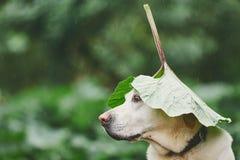 Βροχερή ημέρα με το σκυλί στη φύση Στοκ εικόνες με δικαίωμα ελεύθερης χρήσης
