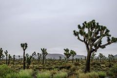 Βροχερή ημέρα στο εθνικό πάρκο δέντρων του Joshua στοκ εικόνα με δικαίωμα ελεύθερης χρήσης