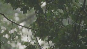 Βροχερή θύελλα έξω Ταλάντευση κλάδων Derevev στον αέρα στη βροχή σε σε αργή κίνηση φιλμ μικρού μήκους
