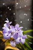 Βροχερή ορχιδέα Στοκ φωτογραφία με δικαίωμα ελεύθερης χρήσης