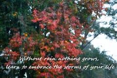 """Βροχερό καιρικό υπόβαθρο με το κείμενο - """"χωρίς βροχή που τίποτα δεν αυξάνεται, μάθετε να αγκαλιάζετε τις θύελλες της ζωής σας """" στοκ φωτογραφία με δικαίωμα ελεύθερης χρήσης"""
