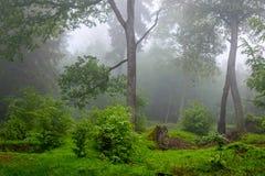 Βροχερό καλοκαίρι στα ξύλα στοκ εικόνες