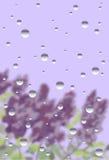 Βροχερό παράθυρο με την πασχαλιά Στοκ Φωτογραφία