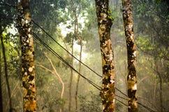 Βροχοπτώσεις μουσώνα στο τροπικό τροπικό δάσος Στοκ εικόνα με δικαίωμα ελεύθερης χρήσης