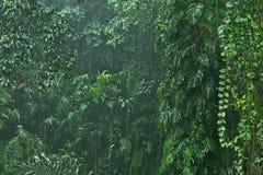 Βροχοπτώσεις στη ζούγκλα Στοκ εικόνες με δικαίωμα ελεύθερης χρήσης