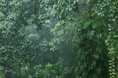Βροχοπτώσεις στη ζούγκλα 2 Στοκ Εικόνα