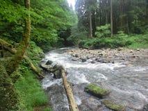 Βρυμένος ορμητικά σημεία ποταμού στοκ φωτογραφία με δικαίωμα ελεύθερης χρήσης