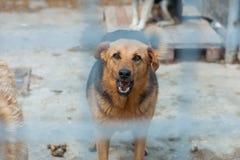 Βρυχηθμοί σκυλιών σε ένα κλουβί στοκ εικόνες με δικαίωμα ελεύθερης χρήσης
