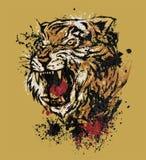 Βρυχηθμός τιγρών Στοκ Φωτογραφία