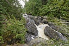 Βρυχηθμός των νερών στα πεύκα Στοκ εικόνα με δικαίωμα ελεύθερης χρήσης