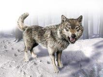 Βρυχηθμός λύκων που στέκεται στο χιόνι. στοκ εικόνες