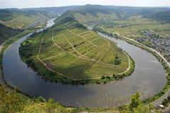 Βρόχος ποταμών, Bremm, Γερμανία, Ευρώπη Στοκ Εικόνες
