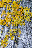 Βρύα σε έναν κορμό σε ένα δάσος Στοκ φωτογραφίες με δικαίωμα ελεύθερης χρήσης