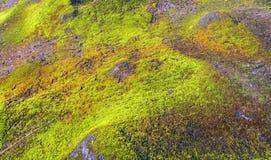 Βρύα στο βουνό Στοκ φωτογραφία με δικαίωμα ελεύθερης χρήσης