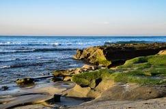 Βρύο θάλασσας στους απότομους βράχους στη Λα Χόγια, Καλιφόρνια Στοκ εικόνα με δικαίωμα ελεύθερης χρήσης