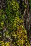 Βρύο θερινό ξύλο στοκ φωτογραφία με δικαίωμα ελεύθερης χρήσης